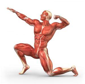 Cara-Menurunkan-Berat-Badan-Otot